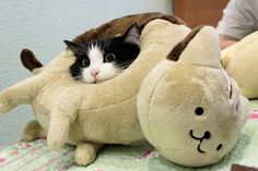 Cat in a cat pillow♥