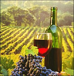 Opportunities for investment on Greek Wine.