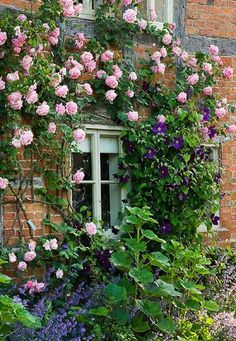 With its rich purple blooms, Clematis 'Viola' is a favorite among many gardeners, especially in combination with repeat-flowering climbing Roses. Here this pretty Clematis partners magnificently with the pink Rose 'Mme Caroline Testout'. Cottage Front Yard, Garden Cottage, House Front, Garden Living, Cottage House, Rose Cottage, Beautiful Gardens, Beautiful Flowers, Rare Flowers