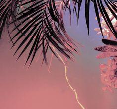 Lighting Experiment / Tropical - Dom Sebastian