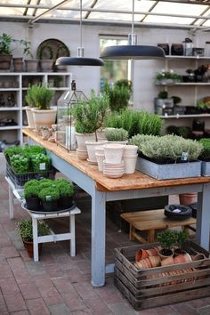 Love the pretty creamy white pots with the stark contrast of the vibrant green herbs in them. The wooden crate with empty pots waiting to be filled is a great storage idea too.