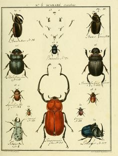 Entomologie, ou, Histoire naturelle des insectes :.  A Paris :De l'Imprimerie de Baudoin,1789-1808