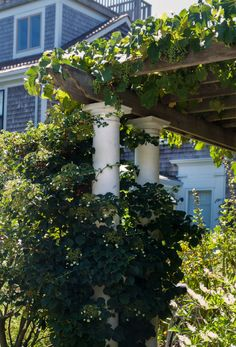 See more of this garden in 10 Garden Ideas to Steal from Provincetown on Cape Cod. Photograph by Justine Hand. Muscadine Vine, Wisteria Garden, Grape Arbor, Pretty Landscapes, Foundation Planting, Carnivorous Plants, Garden Landscape Design, Garden Structures, Outdoor Landscaping