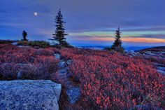rocky meadow at night
