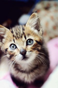 Cute #kitty