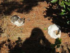 2015年2月13日 松林では猫がひなたぼっこで気持ち良さそう・・   近くのなぎさ公園にて。