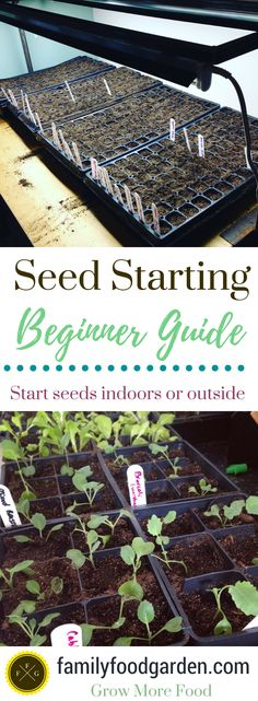 Seed Starting 101- Beginner Seed Starting Guide