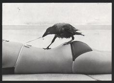 Smart bird: It's said that crows have the same intellect as dogs. hmmm.