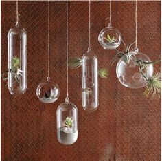 West Elm hanging glass terrariums $9