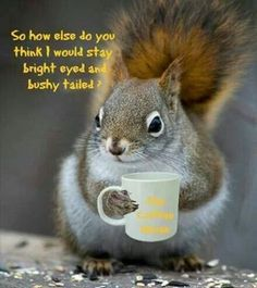I need coffee - Funny Animal Quotes - - I need coffee The post I need coffee appeared first on Gag Dad. I need coffee Funny Baby Quotes, Funny Animal Quotes, Funny Animal Pictures, Funny Animals, Cute Animals, Animal Pics, Coffee Cafe, Coffee Humor, Coffee Quotes