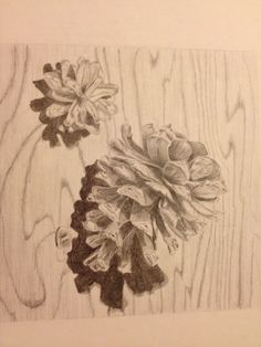 Pine cones Drawing