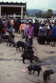 Riobamba market,   ECUADOR