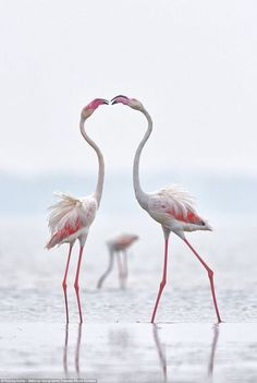 Flamingos. ( TravlGusto.com )