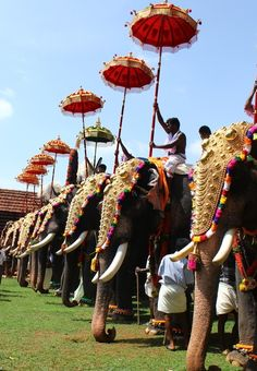 Thrissur Pooram - the festival of elephants, firework, cultural performances, in short an event of incredible beauty - is celebrated in Kerala. Be there to experience the extraordinary with india love Festivals Of India, Festivals Around The World, Indian Festivals, Travel Around The World, Around The Worlds, Best Holiday Destinations, World Festival, Amazing India, Kerala India