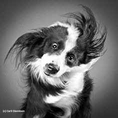 Hundeportraits und Hundefotografie- mehr dazu in unserem Blog unter http://www.diehundewiese.de/hundelifestyle/hunde-portraits-schuttel-dich-fellnase/ Pics by Carli Davidson - hund hunde dog dogs
