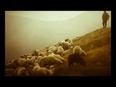 Ao Pastor com Carinho- Cristina Mel - YouTube