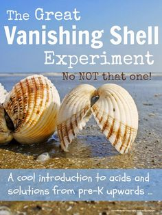 This is super fun science experiment that makes shells disappear in vinegar. And in doing so, very visually introduces kids to acids, solutions, minerals and the strange ways substances react… Cool Science Experiments, Stem Science, Easy Science, Science Fair, Science For Kids, Science Ideas, Science Party, Summer Science, Activity Ideas