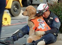 "awwww-cute: "" And this dog saves lives (Source: http://ift.tt/1TX48O1) """