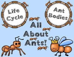 Lesson: Learn about ant bodies and the ant life cycle with this activity. Kindergarten Activities, Science Activities, Ks2 Science, Kindergarten Classroom, Classroom Ideas, Farm Lessons, 1st Grade Science, Butterfly Crafts, Bugs And Insects
