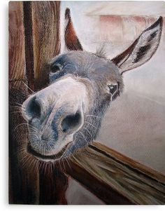 If you wonder what a donkey can eat, you can find all important feeding facts here. Take good care of your donkey with best information. Farm Animals, Animals And Pets, Funny Animals, Cute Animals, Wild Animals, Beautiful Creatures, Animals Beautiful, Arte Equina, Cute Donkey