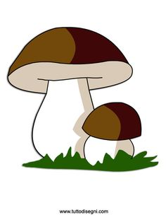 fungo-porcino2