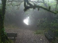Twilight, Dark Paradise, Forest Fairy, Magic Forest, Nature Aesthetic, Dark Forest, The Villain, Faeries, Beautiful Places