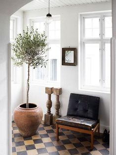Checkered Tile Floors - Get that Black and White Marble Checkered Look Indoor Olive Tree, Best Indoor Trees, Large Indoor Plants, Big Plants, Ficus Lyrata, Ficus Elastica, Decoration Inspiration, Interior Inspiration, Green Decoration