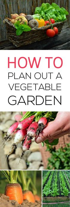 Growing a vegetable garden is a wonderful experience. Learn how to plan out your garden for success!