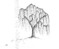 Willow Tree - Limited Ed Digital Print of Original Ink Drawing