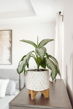 I thought I would share some of my tips and tricks for caring for house plants! I now have 12 indoor house plants (several of which used to be one single pl Cheap Office Decor, Cheap Home Decor, Entryway Decor, House Plants Decor, Plant Decor, Classic Home Decor, Vintage Home Decor, Goals Tumblr, Home Remodeling Diy