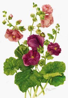 Como me gustan las láminas de botánica Os pueden servir para decorar, enmarcar, hacer etiquetas.... A mi me encantan , espero que os guste...