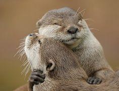 Otter love <3 kimbearlysden: http://kimbearlysden.tumblr.com/