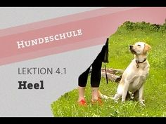 Sitz für Fortgeschrittene: Seite Heel beibringen Warte Bleib Hundeschule beibringen Video - YouTube