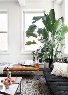 Classica, ricca di piante e tutta da toccare: ecco come cambia la nostra casa