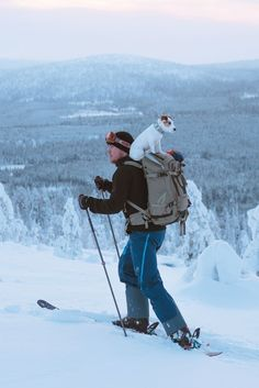 JRT on a backpack. Hiking, skiing with dog in Lapland Salla. Outdoor adventure Sweetest JRT on a backpack. Hiking, skiing with dog in Lapland Salla. Outdoor adventure Sweetest JRT on a backpack. Hiking, skiing with dog in Lapland Salla. Chien Jack Russel, Jack Russell Dogs, Jack Russell Terrier, Terrier Dogs, Pitbull Terrier, Terriers, I Love Dogs, Cute Dogs, Funny Animals