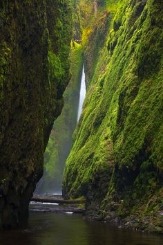 Oneonta Gorge Oregon, I hiked this when I was in high school, it was like a dreamland of green. I wish I could do it again!