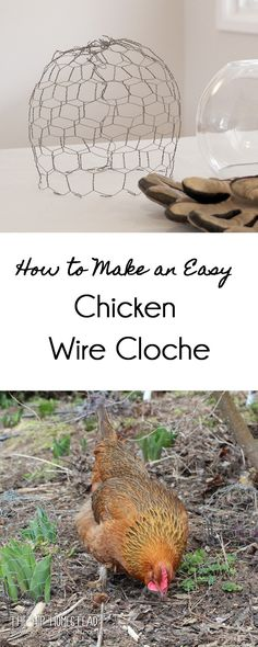 $1.04 Wire Cloche | Pinterest | Chicken wire, Veggies and Gardens