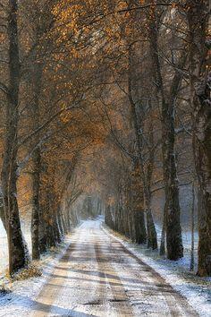 Route enneigée au milieu des arbres