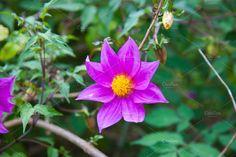 Flower by TalyaPhoto on @creativemarket