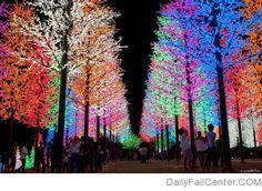 Selangor, Malaysia/Chrismas Lights