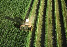Las nuevas ayudas de la UE cambiarán el mapa de cultivos en España
