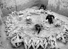 capanna fatta di ossa di mammut attribuiti a Cro-Magnon. Mezhirich, Ucraina. Costruito aprox. 15.000 anni fa