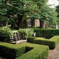 clipped boxwood hedges garden with wooden bench Clipped Hedges Shrubs such as boxwood and privet are often sheared to form a hedge. To maintain a solid wall of green, shear the new growth frequently during the early part of the growing season. Boxwood Garden, Garden Hedges, Garden Landscaping, Boxwood Hedge, Landscaping Ideas, Boxwood Shrub, Privacy Landscaping, Patio Ideas, Backyard Ideas