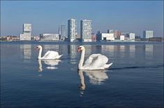 Almere, The Netherlands