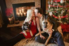 Holiday Portraits/Dogs ♥