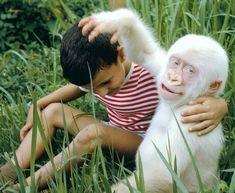 61 Pics and Memes For a Cool Break - Funny Gallery Gorila Albino, The Animals, Funny Animals, Strange Animals, Amazing Animals, Interesting Animals, Animals Beautiful, Albino Gorilla, Melanistic Animals