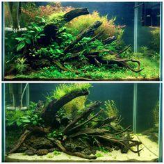 "22 Likes, 1 Comments - Aqua Bio (@aqua.bio) on Instagram: ""Nature Aquarium  #natureaquarium #aquascaping #aquascape #aquaticplants #plantedtanks #aquabio"""