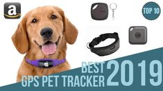 10 Best Gps Tackers for Pets 2019 / Find Your Pet / GPS & Bluetooth Pet Collar 2019 Pawscout - The Smarter Pet Tag - Outdoor Pet Tracker for Cats. Funny Pictures Of Women, Tracker Free, Pet Finder, Get Gift Cards, Instagram Giveaway, Gps Tracking, Medical Information, Pet Tags, Easy Food To Make
