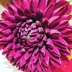 "#california #flowers #art #artaday #artchallenge ""Fibonacci unfurling"""