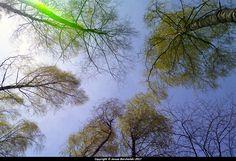 Bytów. jezioro Jeleń. 2017-05-02